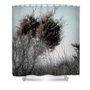 Winter Cedar Shower Curtain