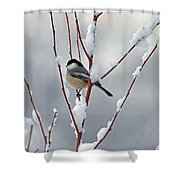 Winter Chickadee Shower Curtain