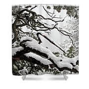 Winter Comes To Colorado Shower Curtain