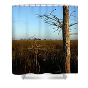 Winter Cypress Shower Curtain