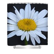 Winter Daisy Shower Curtain