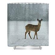 Winter Deer Walk Shower Curtain