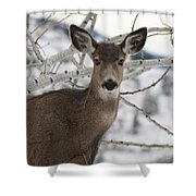 Winter Doe Of The Okanagan Shower Curtain
