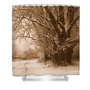 Winter Dream Shower Curtain by Carol Groenen