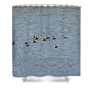 Winter Ducks Swimming Away  Shower Curtain