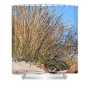Winter Dunes Shower Curtain