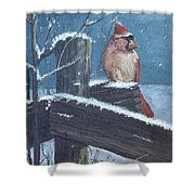 Winter Female Cardinal Shower Curtain
