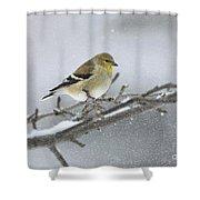 Winter Finch 2010 Shower Curtain