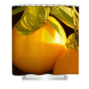 Winter Fruit Shower Curtain