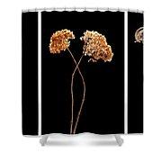 Winter Garden Triptych Shower Curtain