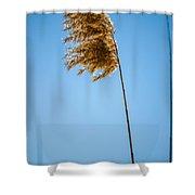 Winter Glow #4 Shower Curtain