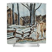 Winter Grazing  Shower Curtain by Charlotte Blanchard