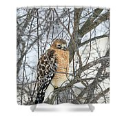 Winter Hawk Shower Curtain