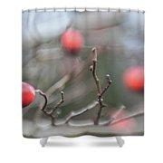 Winter Hawthorn Shower Curtain
