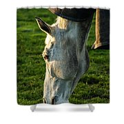Winter Horse 3 Shower Curtain