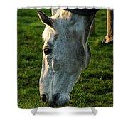 Winter Horse 4 Shower Curtain