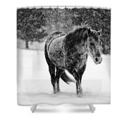 Winter Horse Shower Curtain by Mark Courage