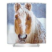 Winter Horse Portrait Shower Curtain