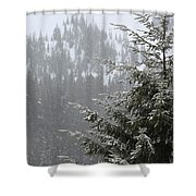 Winter In The Forest Shower Curtain