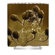 Winter Jewels Shower Curtain