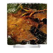 Winter Leaves In Ice Shower Curtain