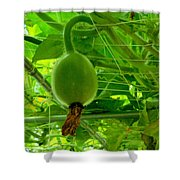 Winter Melon In Garden 3 Shower Curtain