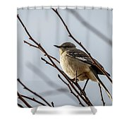 Winter Mockingbird Shower Curtain