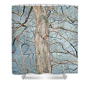 Winter Morning Shower Curtain by Leah  Tomaino