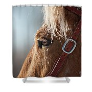 Winter Mustang Eye Shower Curtain