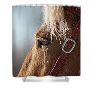 Winter Mustang Eye Shower Curtain