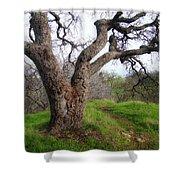 Winter Oak Shower Curtain