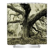 Winter Oak Shower Curtain
