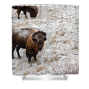 Winter Pasture Shower Curtain