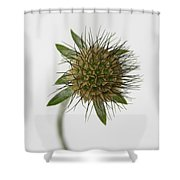 Winter Pin Cushion Plant Shower Curtain