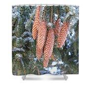Winter Pine Cones Shower Curtain