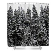 Winter Pine Spires Shower Curtain