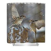 Winter Quarrel Shower Curtain