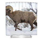 Winter Ram Shower Curtain
