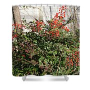 Winter Red Berries Shower Curtain