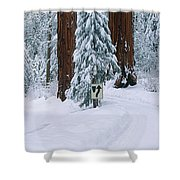 Winter Road Into Sequoia National Park Shower Curtain
