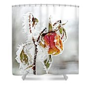 Winter Rose Shower Curtain