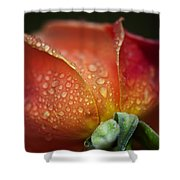 Winter Rose Four Shower Curtain