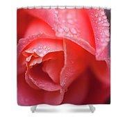 Winter Rose Three Shower Curtain