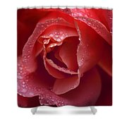Winter Rose Two Shower Curtain
