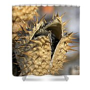 Winter Seed Pod Shower Curtain