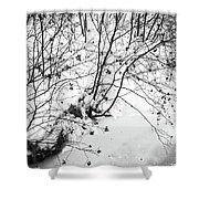 Winter Shrubs, New Hampshire Shower Curtain