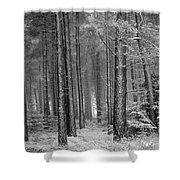 Winter, Slaley Woods Shower Curtain