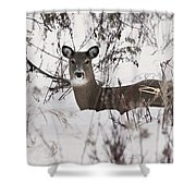 Winter Slumber Shower Curtain
