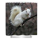 Winter Squirrel Shower Curtain by William Selander