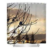 Winter Sun 3 Shower Curtain
